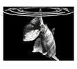 Bodega Contra Corriente Logo